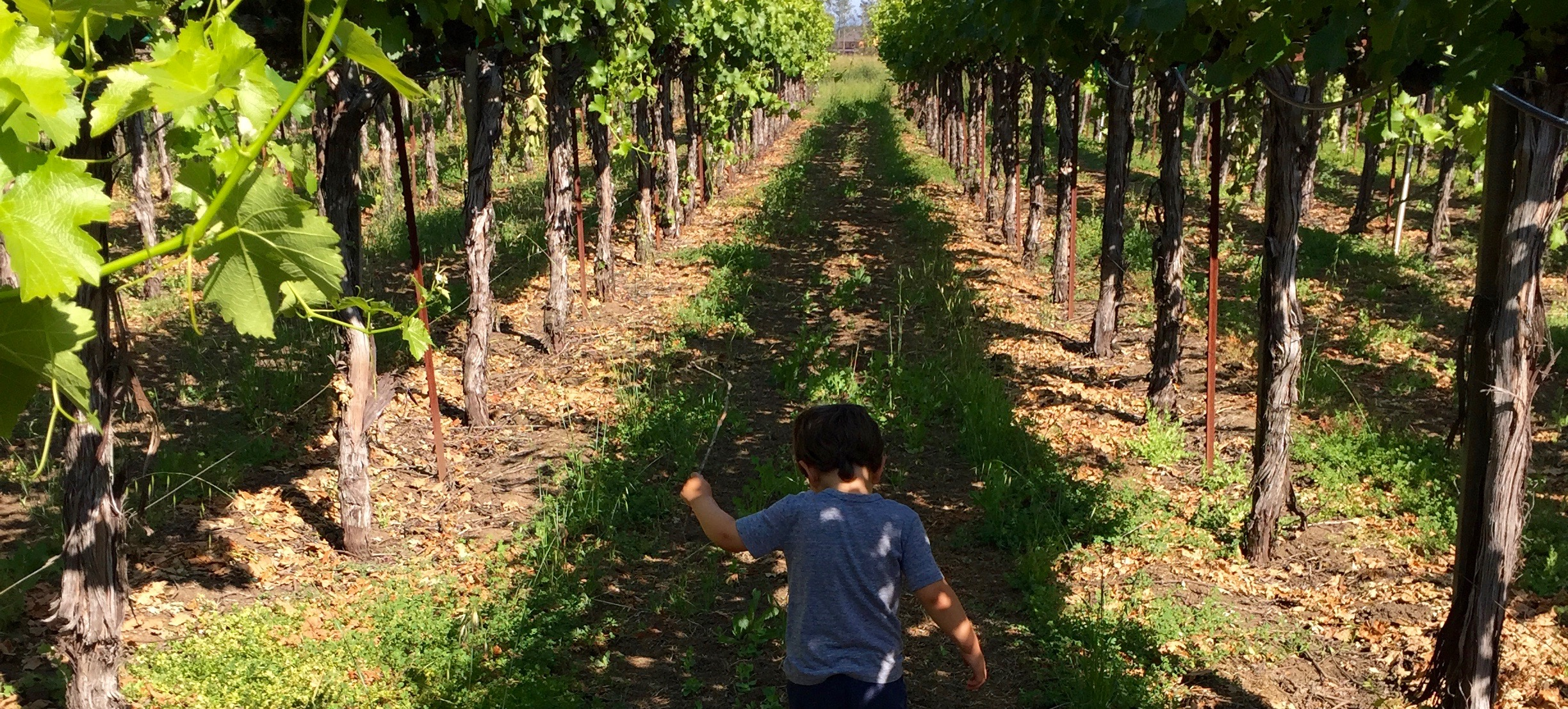 Adrien in vineyard